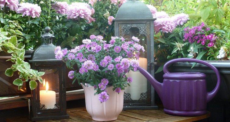 deco violette
