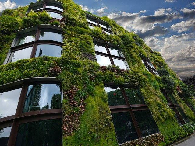 maison avec verdure